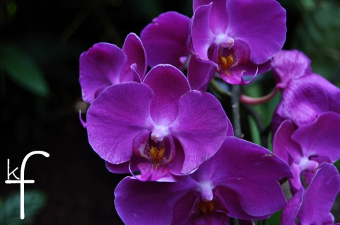purple_orchids.jpg